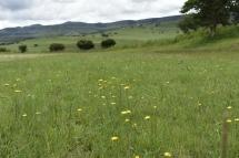Camp Corner Drakensville (13)