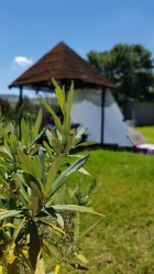 Camp Corner Drakensville (28)